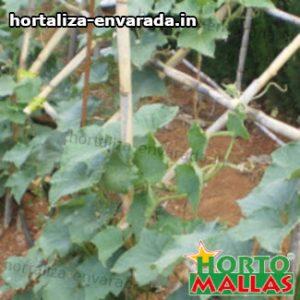 sistema de estacas entutorando cultivo
