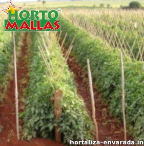 Plantas de hortalizas envardas