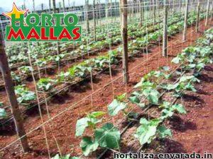 Malla espaldera hortomallas instalada en campo de hortalizas