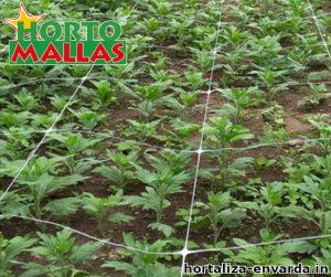 Malla espaldera hortomallas dando soporte a las plantas de hortalizas